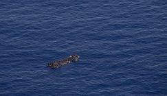 جلهم سوريون.. إنقاذ 25 لاجئا من الغرق على سواحل تركيا